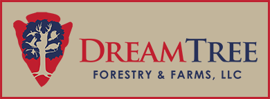 Dream Tree Forestry